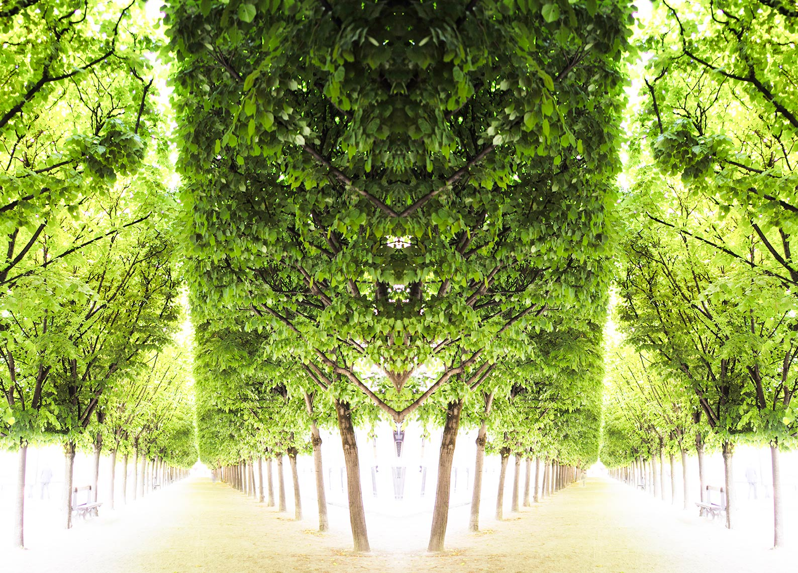 Trees-IV-Palais-Royale